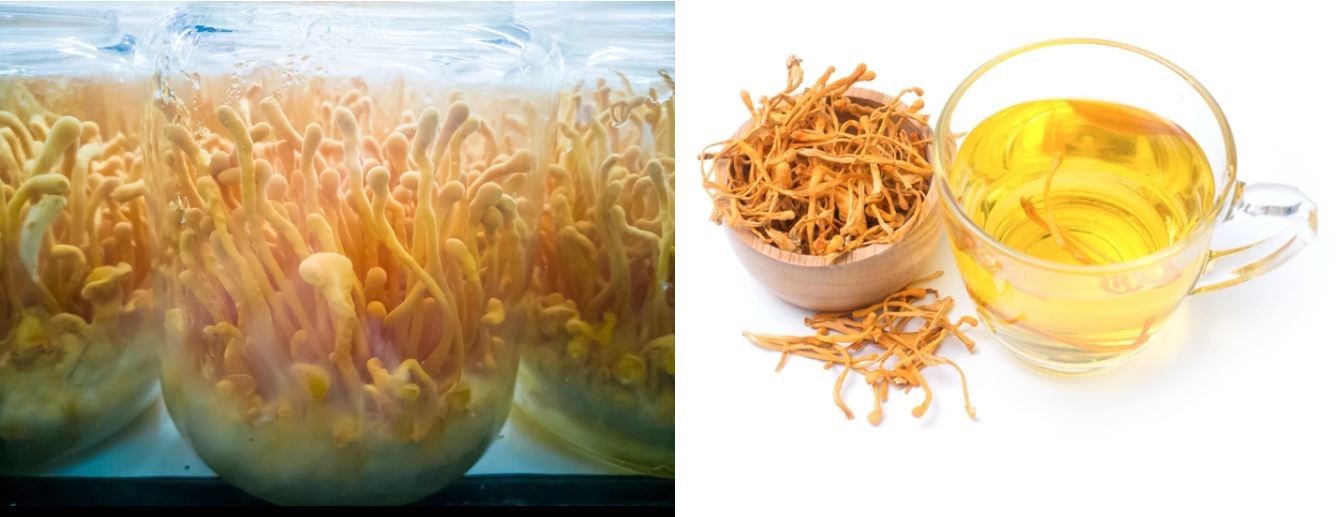 Cach-su-dung-Dong-trung-ha-thao-kho-HTCordyceps